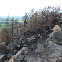 Burnt trees on the Roaches skyline